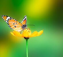 Monarch Butterfly on a Yellow Flower - Cases, Prints and More by BadJokeJoel