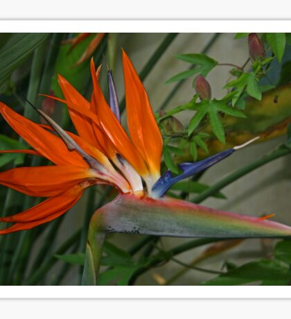 Bird of Paradise Flower Sticker