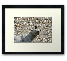 The Pigeon and his Polar Bear Framed Print