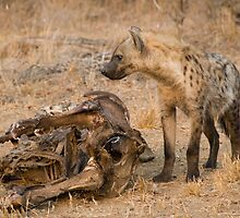Young Spotted Hyena by Erik Schlogl