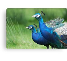 Peacocks in the Park Canvas Print