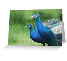 Peacocks in the Park Greeting Card