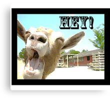 Goat Saying Hey! Canvas Print