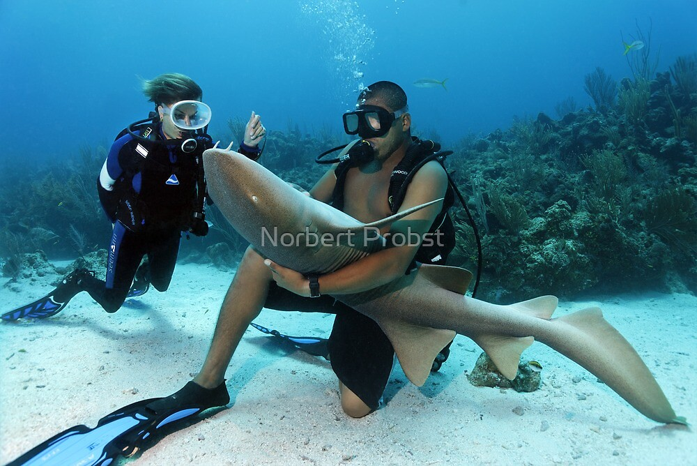 Shark Whisperer by Norbert Probst