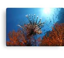 Spiny Beauty Canvas Print
