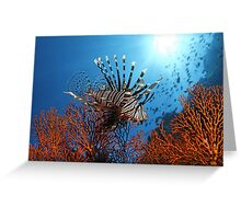 Spiny Beauty Greeting Card