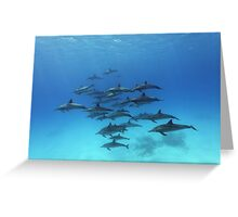 Dolphins Paradise Greeting Card
