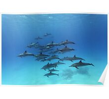 Dolphins Paradise Poster