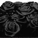 Black Velvet Roses by eon .