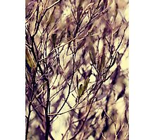 Patterns in my Winter Garden Photographic Print