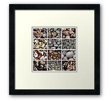 Shell Shots Framed Print