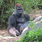 Gorilla Says by dolphinandcow