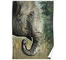 Elephant Print  Poster