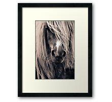 Portrait Of A Pony Framed Print