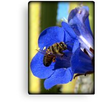 Bee Photogenic  Canvas Print