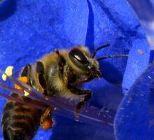 Bee Photogenic  Sticker