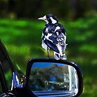 Nature - direct and through a mirror by indiafrank