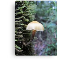 An elegant tree hugger Canvas Print