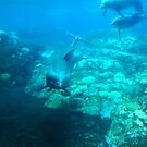 Under SeaWorld by dolphinandcow