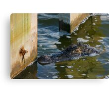 alligator encounter Canvas Print