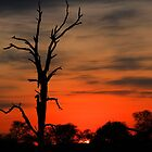 Londolozi Winter Sunrise by jozi1