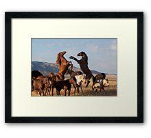 Mustang Clash Framed Print