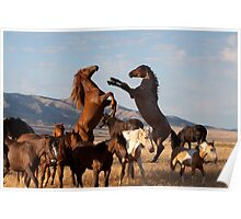Mustang Clash Poster