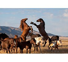 Mustang Clash Photographic Print