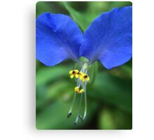 Tiny Blue and Yellow Flower Canvas Print