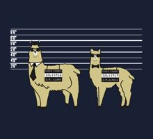 Difference Between Alpacas and Llamas Explained Kids Clothes