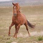 Crazy Horse by Kent Keller