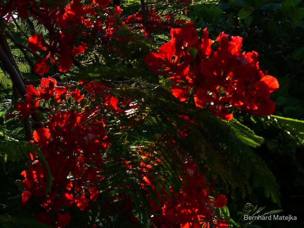 like fire in the sun III - como fuego en el sol by Bernhard Matejka