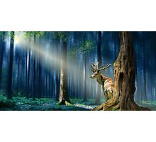 The deer in the mystical forest  Photographic Print