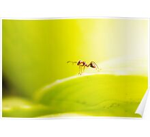Lone Ant Poster