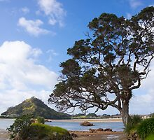 Pohutukawa tree on the foreshore. by Anne Scantlebury