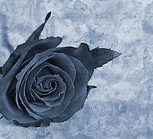 The last rose of summer cyanotype by John Edwards