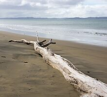 Fallen tree. by Anne Scantlebury