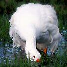 Just Ducky! by SuddenJim