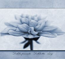 Dahlia pinnata Cyanotype by John Edwards