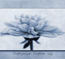 Dahlia pinnata Cyanotype by John Edwards
