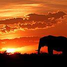 Sunset on the veldt by Linda Sparks