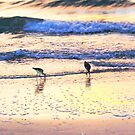 Sandpipers by ♥⊱ B. Randi Bailey