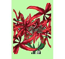 Bunch of Metallic Red Flowers Photographic Print