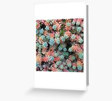 enhanced rainbow sedum Greeting Card