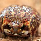 Bushveld Rain Frog by Antionette