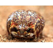 Bushveld Rain Frog Photographic Print