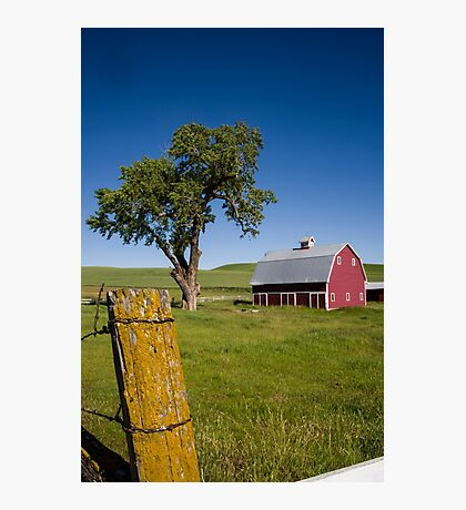 Tree in the Barn Yard Photographic Print