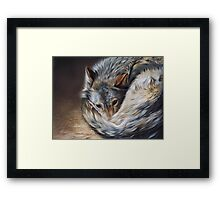 Watchful rest (Grey Wolf) Framed Print