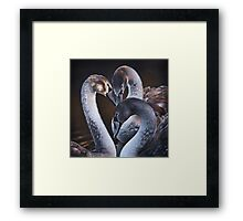 Swan Whispers Framed Print