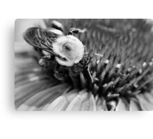 Black and White Bumble Canvas Print